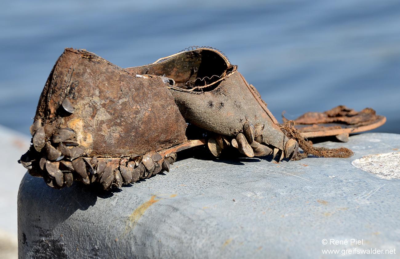 Alter Schuh aus der Peene