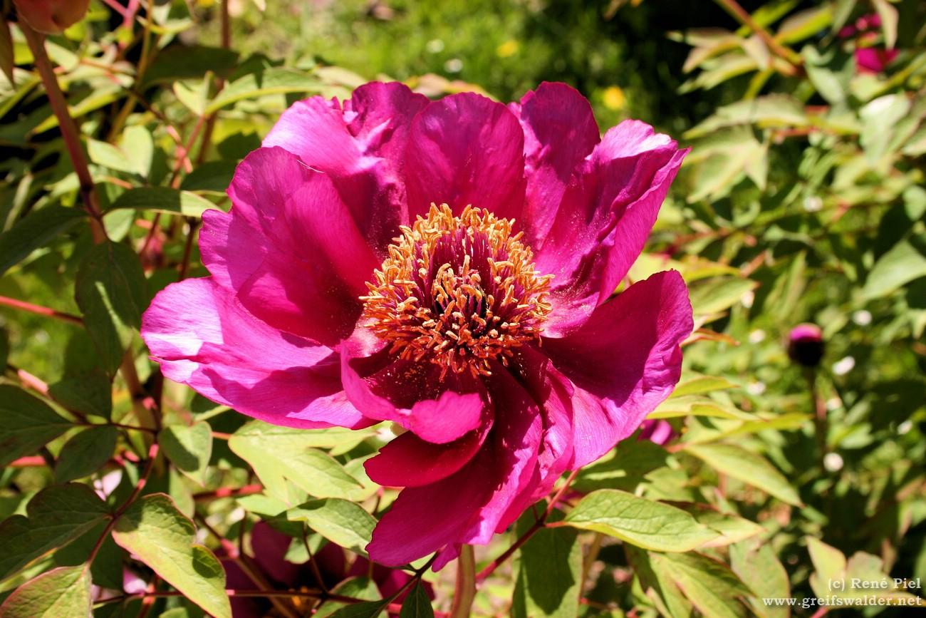 Blühen im Arboretum