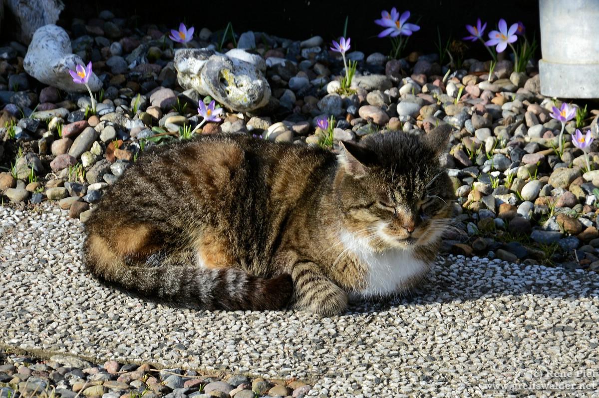 Katze genießt die Sonne