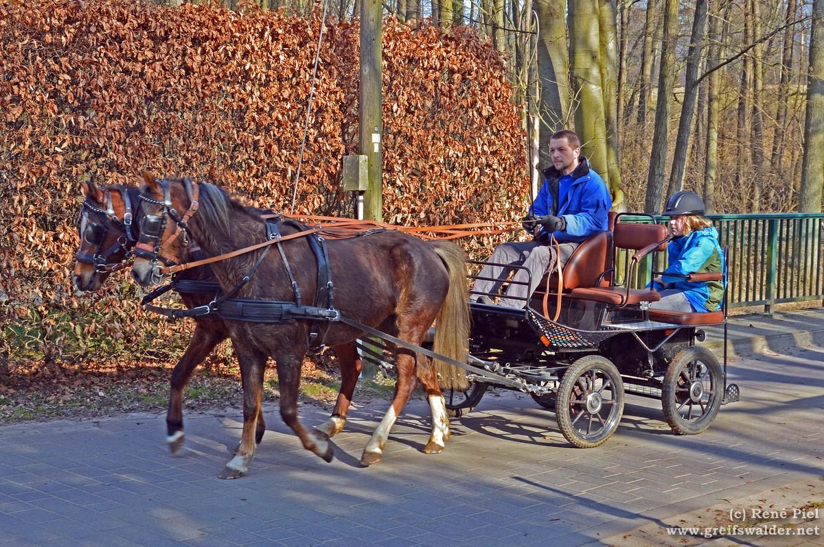 Pferdekutsche in Hanshagen
