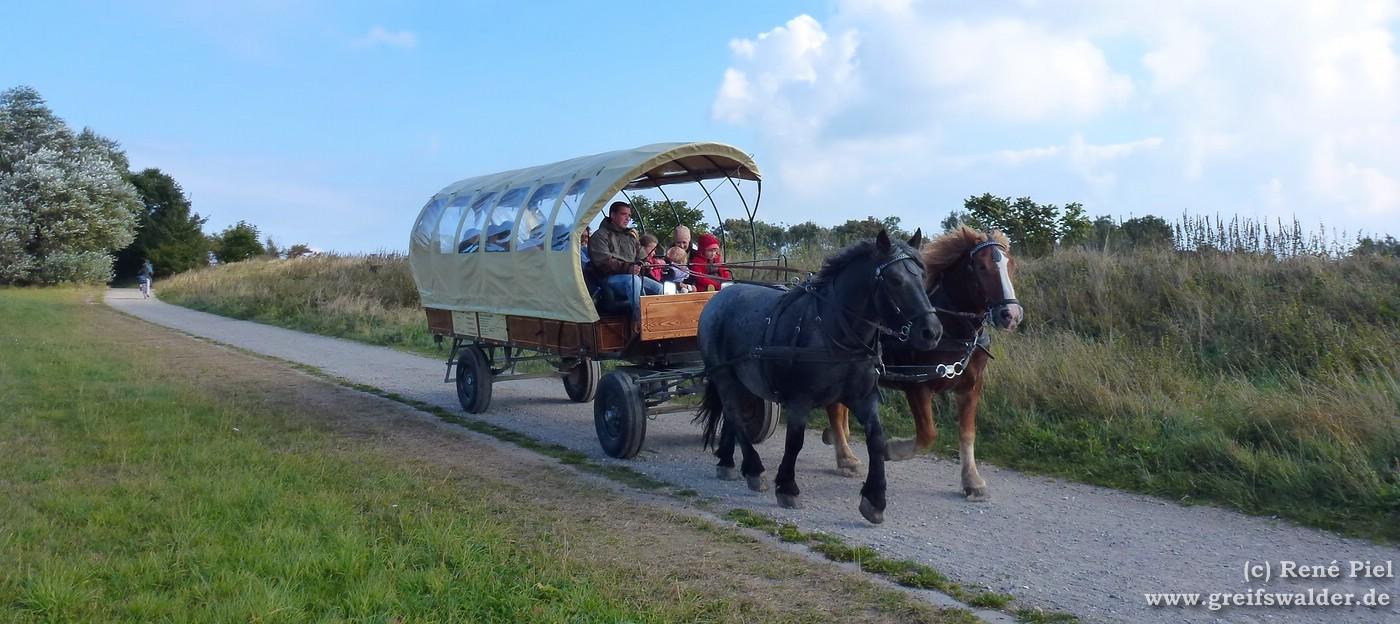 Pferdekutsche auf der Insel Rügen