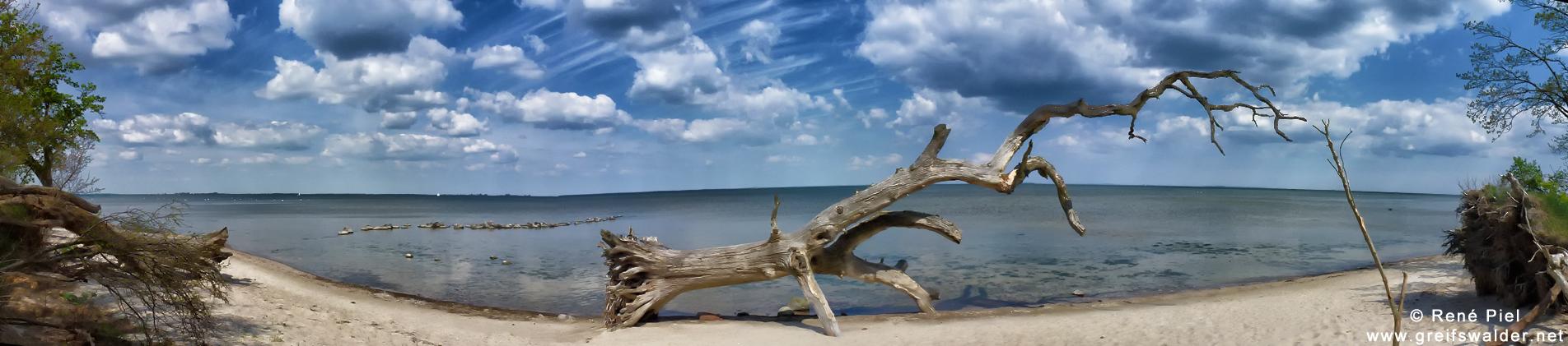 Panorama - Baum am Strand