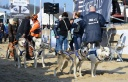 Baltic Lights - Schlittenhunderennen in Heringsdorf